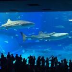 沖縄美ら海水族館 無料入館